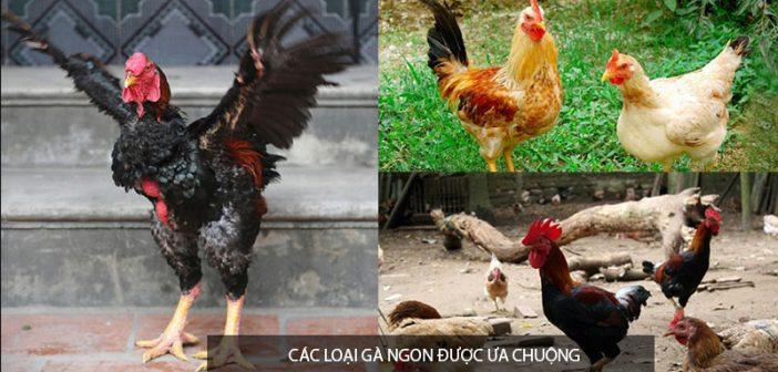 Những loại gà ngon nhất