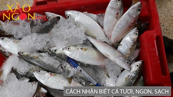 Cách nhận biết cá tươi, ngon, sạch