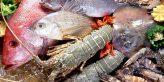 Cách chọn các loại hải sản đảm bảo tươi ngon, chất lượng