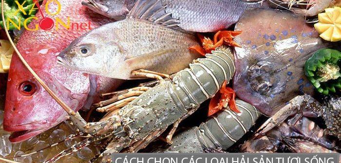 Mách bạn cách chọn các loại hải sản tươi sống chất lượng