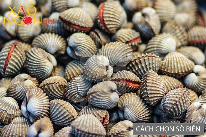 Cách chọn sò biển tươi ngon