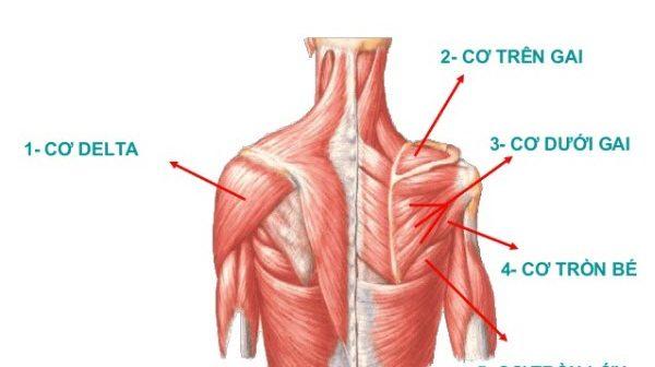 dấu hiệu của bệnh teo cơ delta