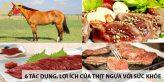 6 tác dụng, lợi ích của thịt ngựa đối với sức khỏe 11