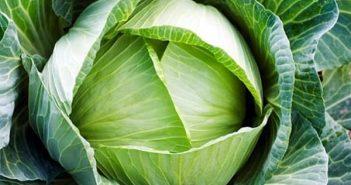 Những lưu ý quan trọng khi sử dụng rau bắp cải