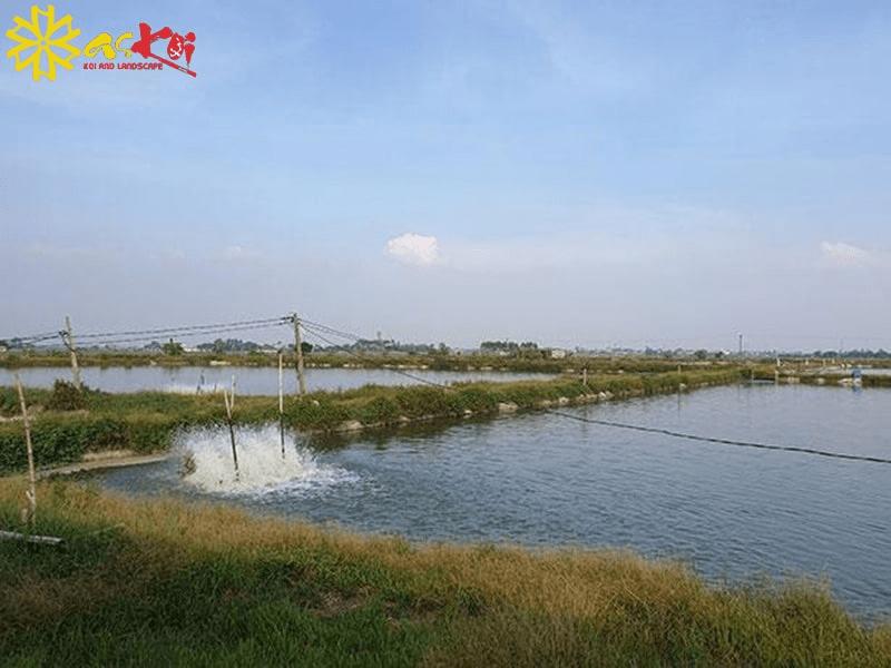 Trại cá lớn nhất miền Bắc tại Askoi Farm