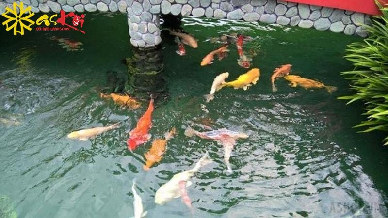 Thiết kế hồ cá Koi mini cần có những ý tưởng hay và có sự tư vấn chuyên môn